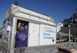 Milyon dolarlık atlar uçakla İstanbula getirildi