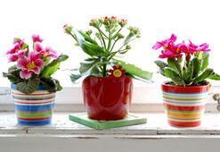 Çiçeklerle 5 dakika
