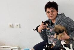 Kapıkulede yakalanan yavru köpekler, ihaleyle satılacak