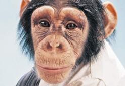 Şempanzeler yasal kişi mi oluyor