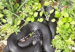 Bahçesinde yakaladığı yılanı serbest bıraktı Nedeni ise...