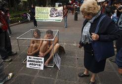 Kafeste yarı çıplak protesto