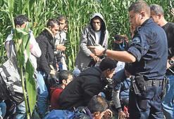 Mısır tarlasında 25 kaçak