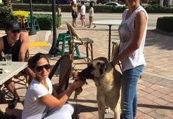 Adriana Limanın köpeği