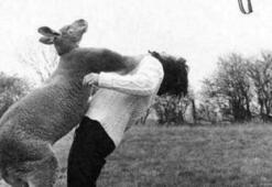 Hayvanlar sinirlenince