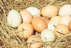 Köy yumurtası kandırmacasına son