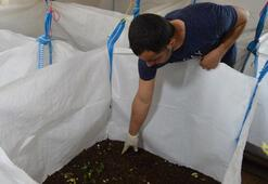 Evinin bir odasında Kaliforniya solucanı yetiştiriyor