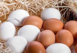 Köy yumurtası hilesini bitirecek uygulama başlıyor