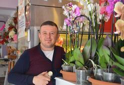 Gıda boyası ile boyanan orkideler yoğun ilgi görüyor