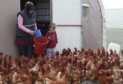 İstediği Lezzette Yumurta Bulamayınca Çiftlik Kurdu