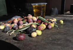 Kuraklık Nizip zeytinyağını vurdu