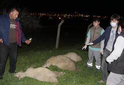 Son dakika: İstanbulda kimyasal alarmı Hayvanlar telef oldu, ev boşaltıldı...