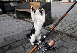 İstanbul yüz binlerce kediye ev sahipliği yapıyor