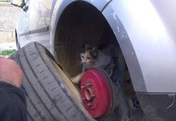 Yaramaz kedi itfaiye erlerine zor anlar yaşattı