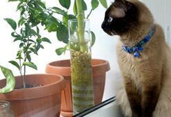 Kasım ayında ev bitkilerinin bakımı