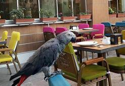 Mardinde 4 dilde Hoşgeldin diyen papağanı bulana 1500 lira ödül