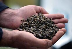Binlerce bal arısı telef oldu, arıcılar paniğe kapıldı