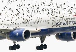 Bir uçak bir kuşa çarparsa ne olur