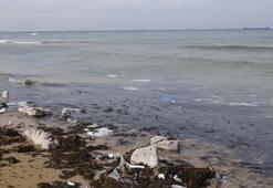 İstanbulun ünlü plajını görenler dehşete düştü