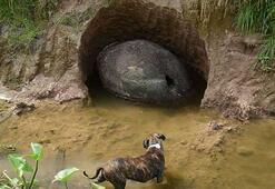 Bahçeden 10 bin yıl öncesine ait dinozor kabuğu çıktı