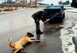 Hayvana şiddete hapis cezası verilsin