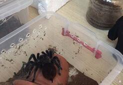 Şok Terör baskınından tarantula çıktı...