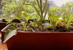 Sebze yetiştirmenin püf noktaları