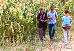 ABDden getirdiği tohumlarla rengarenk mısır üretti