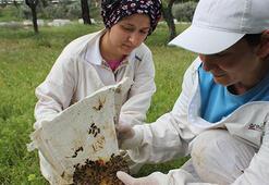 Aydında iki kadın yeni bir arı ırkı geliştirdi
