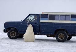 Meraklı kutup ayısı böyle kaydedildi