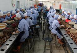 Zonguldaktan Avrupaya yılda 1500 ton salyangoz ihracı