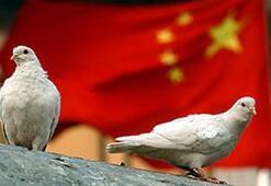 Çinin en gizli askeri projesi: Mektup güvercini