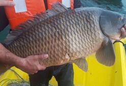 Avlanma yasağı olan gölette ağlara takılan balıkları jandarmalar kurtardı