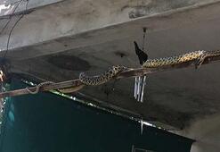 Yılanlar depremin işaretçisi miydi