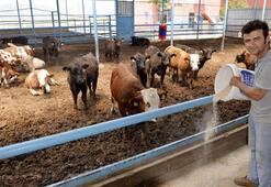 Aylık ücreti 2-3 bin TL olan çobana kız vermiyorlar