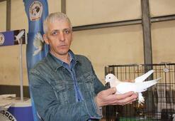 Dünyada eşi olmayan 100 bin TLlik güvercinler fiyatıyla şaşırtıyor