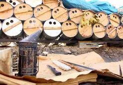 Karakovan balının hasadına başlandı