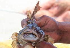 Dışı zehirli, tadı lezzetli balık