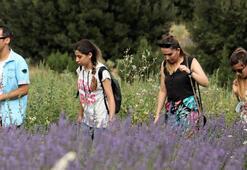 'Lavanta' Burdur Gölü'ne umut oldu