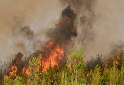 İzmir, Çanakkale ve Mersinde 1030 hektar orman kül oldu