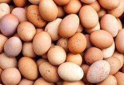 Çadırda ürettiği yumurtaları Türkiyeye pazarlıyor