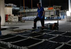 Zeytin atıklarından mangal kömürü üretti