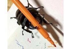 Ressam böcek internet fenomeni oldu