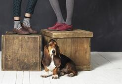 Hush Puppies 2012 Sonbahar-Kış Koleksiyon