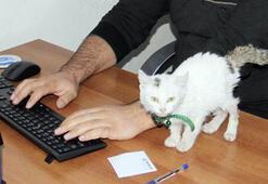 Askerlerlerin yaralı halde bulduğu kedi kurumun maskotu oldu