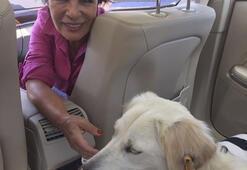 Hülya Koçyiğit barınaktan köpek aldı