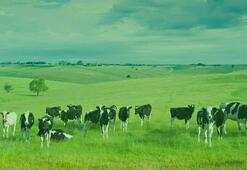 İşte Çiftlik Bank gibi 11 girişim Sırada onlar var