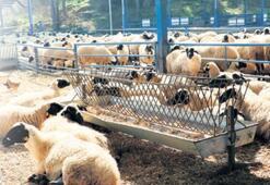 'Türkiye'nin hayvancılık merkezi olacağız'