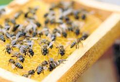 Saf Kafkas arılarından şifalı ballar