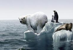 Küresel ısınma yerel canlı türlerinin yarısını yok edebilir